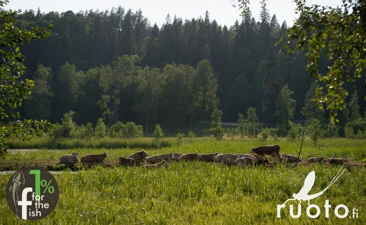 RuotoBlog_Riverkeepers_Firskarstalkoot_1per-10