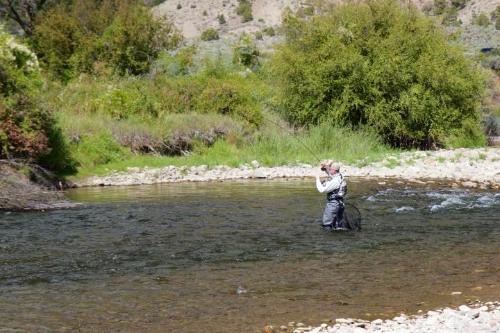 Hyvän näköinen puskan alunen Eaglella tarjosi kaloja Jyrkille