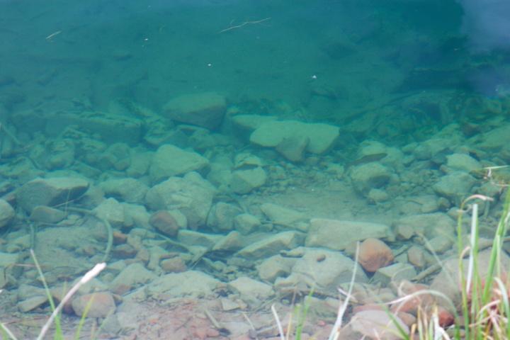 Sylvan-järven vesi on kirkasta ja kaloja pystyy bongaamaan rantapenkalta